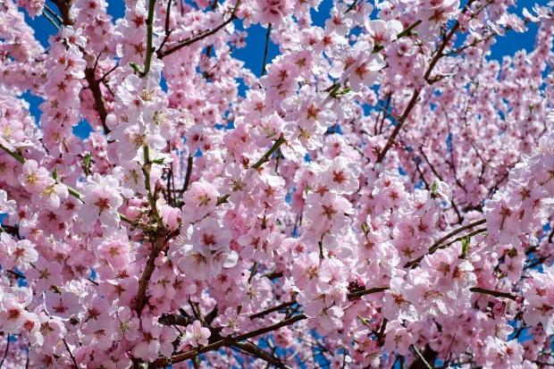 tradiții de florii