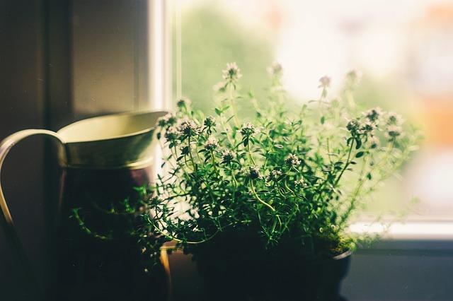 plante care atrag energiile pozitive și bunăstarea în casa ta