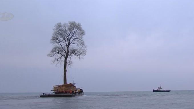 Copaci plutitori pe Marea Neagră. Care este explicația