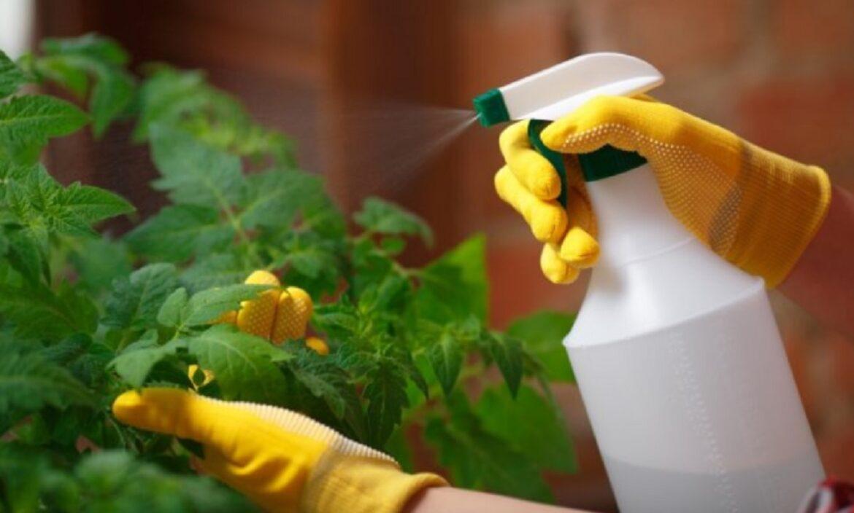 Salvați roșiile de mană – 6 rețete cu care puteți salva legumele!