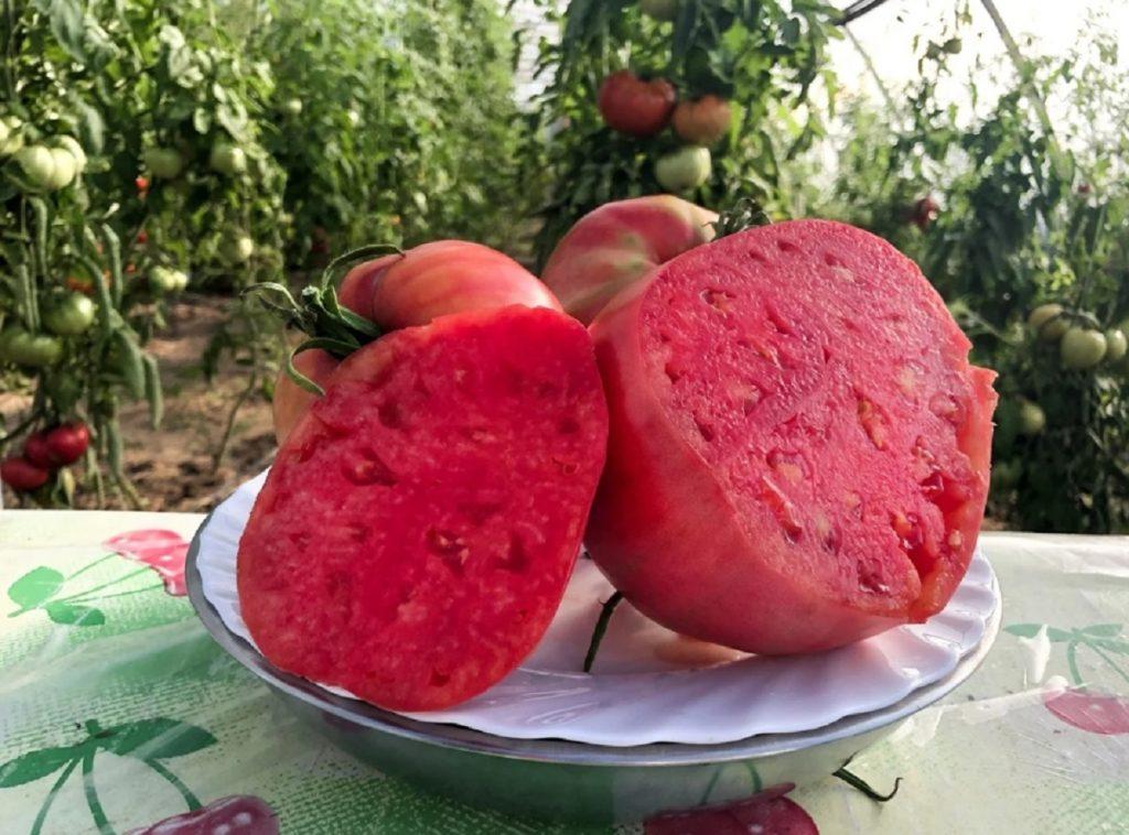 Îngrășământ pentru tomatele înflorite, care vă asigură o recoltă bogată și sănătoasă!