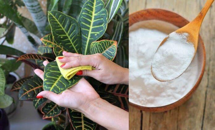 17 utilizări ale bicarbonatului de sodiu pentru a vă menține grădina în stare perfectă