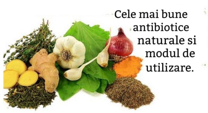 Antibiotice naturale pe care le foloseau bătrânii noștri în locul pastilelor
