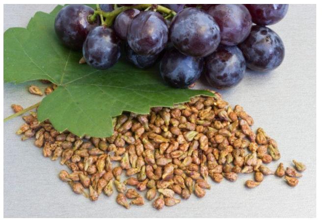 Semințele care ucid celulele canceroase – semințele de struguri